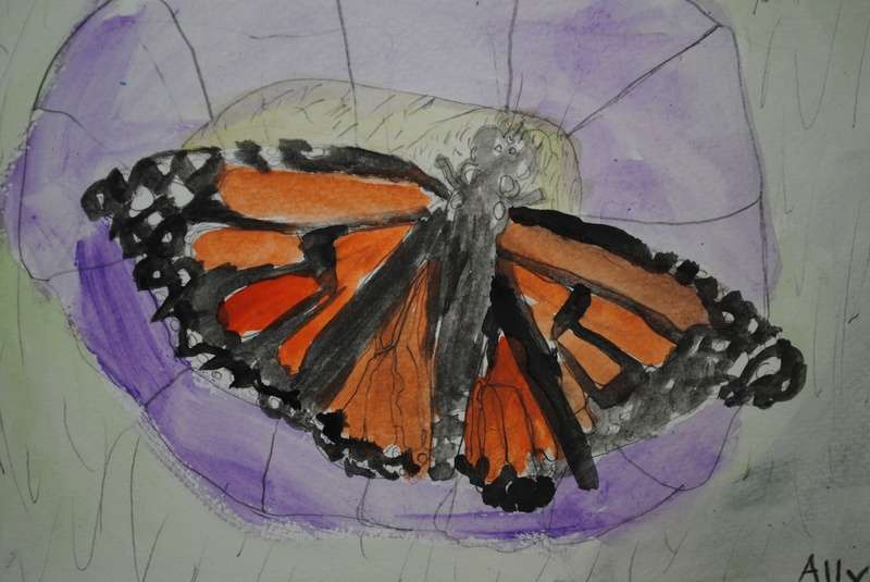 Butterfly- Watercolor