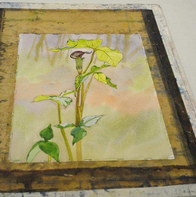 Jackin Pulpit, Watercolor